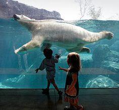 Brookfield Zoo, IL