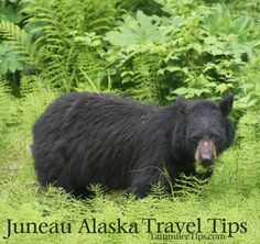 Tips for your day in Juneau during Alaska Cruise