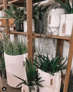 From a cactus to a sprawling blossom, indoor plants can bring life to any room - regardless of size. Come in store to view the range Recycled Timber Furniture, Patio Windows, Window Boxes, General Store, Indoor Plants, Cactus, Recycling, Range, Gardening