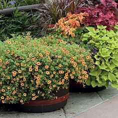 82 Creative Container Gardens | Calibrachoa by margery