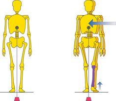 Negli ultimi decenni, l'evoluzione della scienza del cammino ha prodotto una serie di termini e concetti relativi alle osservazioni della camminata umana. La terminologia che descrive la camminata umana è iniziata con frasi descrittive ottenute dall'osservazione...