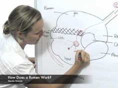 ▶ How Does a Rumen Work - YouTube Are you feeding animals? Be smart and regularly test your feed samples learn more http://agsource.crinet.com/page481/FeedAndForageAnalysis
