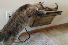 cat-drinking-from-cat-water-fountain.jpg
