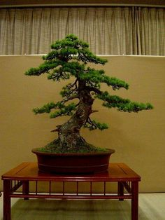 ♣☼Don't you love this pretty #bonsai tree!♣☼ #BonsaiInspiration