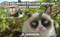 Inspirational words from Grumpy Cat