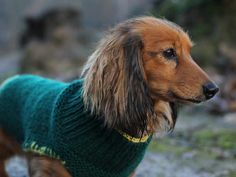Try this free knitting pattern for a charming little knitted dog jacket that can be adjusted to fit almost any breed.
