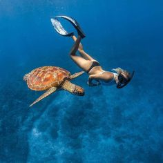Early morning swim with one of the many turtles that call the Gili islands home….