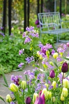 Just love the lemon yellow and deep wine colour tulips with lilac stocks. Beautiful....