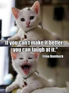 If you can't make it better make it laugh Can Dogs Eat Corn, Cat Captions, Kitten Quotes, Dog Growling, Erma Bombeck, Cat Boarding, Live Laugh Love, Cat Memes, Kittens Cutest