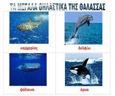 dreamskindergarten Το νηπιαγωγείο που ονειρεύομαι !: Λίστες αναφοράς για τα ψάρια και τα ζώα της θάλασσας Summer Crafts, Underwater, Whale, Kids, Oceans, Animals, Worksheets, Greek, Young Children