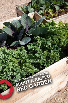 Raised Bed Gardens: 5 Tips on Raised Bed Gardening from Troy-Bilt