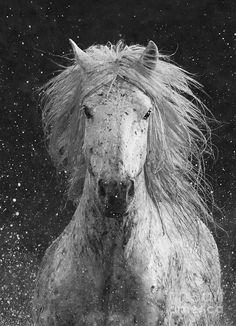 Splash Photograph  - Splash Fine Art Print