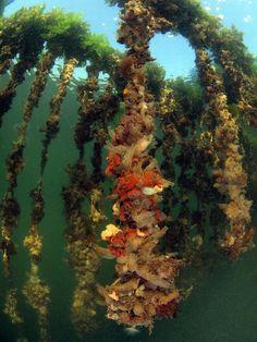 #ZIERIKZEE - Aan het #WK #Onderwaterfotografie, dat van #21 tot en met #25 mei in #Zeeland wordt gehouden, doen twintig landen mee. Die landen brengen ongeveer tachtig deelnemers op de been.