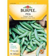 recipe: bush bean seeds home depot [13]