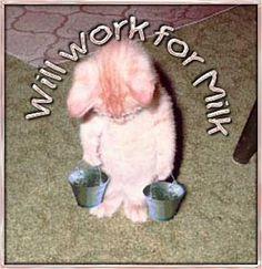 CAT WORK MILK
