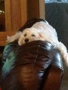 Corky loves to sleep here