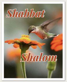 Happy Sabbath Quotes, 4th Commandment, Good Shabbos, Shavua Tov, Sabbath Day, Shabbat Shalom, Jerusalem Israel, Women Of Faith, Thoughts