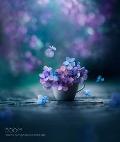 HD wallpaper Cooper Copii: Most beautiful nature wallpaper for everyone Flower Wallpaper, Nature Wallpaper, Hydrangea Wallpaper, Beautiful Flowers, Beautiful Pictures, Romantic Flowers, Simply Beautiful, Blue Hydrangea, Hydrangea Garden