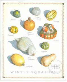 Winter Squashes - John Burgoyne Studio