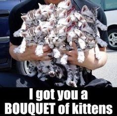 I Got You A Bouquet Of Kittens cute memes animals cat cats adorable animal kitte. - I Got You A Bouquet Of Kittens cute memes animals cat cats adorable animal kittens pets kitten funn - Baby Animals, Funny Animals, Cute Animals, Animal Funnies, Animal Memes, Cute Memes, Funny Cute, Funny Memes, Super Funny