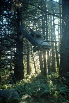 An abandoned Ford hanging in a tree.