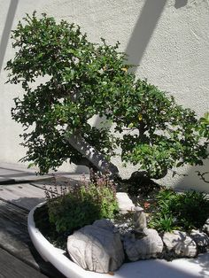 Bonsai Trees Penjing with Fisherman by JCardinal18, via Flickr
