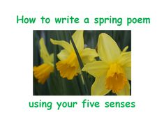 This poetry resource encourages your pupils to use their 5 senses to write a spring poem. It consists of a complete lesson plan & PPT. Spring Poem, Writing Poetry, Teaching Resources, Poems, Presentation, How To Plan, Poetry, Verses, Poem