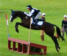 Raptor Force, OTTB.- this is an awesome picture!!!!