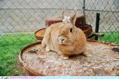 il coniglietto tippie...