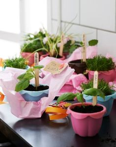 Plant your herbs in pots, buckets, jars, fancy tea cups, old baked bean cans – anything goes! #IKEA #GYO #growyourown