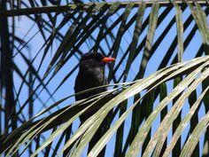 Puerto Maldonado - Peru Aras Tour mit Wasai Eco Lodge