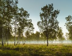 """Check out new work on my @Behance portfolio: """"new day begins"""" http://on.be.net/1FItT9z"""