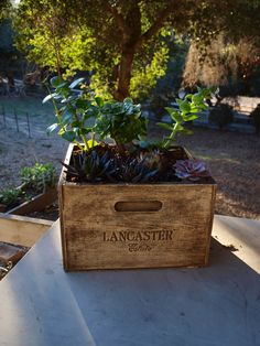 Lancaster Winery Concrete Planter Box With Natural Wood Finish Dimensions 11 5 X 13