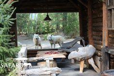 Alaska Safari Lodge Zoo La Fleche - France