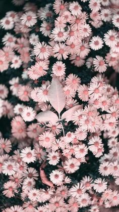 Pretty Flower Wallpaper iPhone Backgrounds: the best beautiful flower wallpaper aesthetics and spring flower wallpaper backgrounds. If you're after stunning imagery of flower wallpaper pink, pink flow Spring Flowers Wallpaper, Beautiful Flowers Wallpapers, Pretty Wallpapers, Summer Wallpaper, Flor Iphone Wallpaper, Pink Wallpaper, Iphone Backgrounds, Wallpaper Backgrounds, Mobile Wallpaper