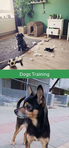 Boxer Dog Training Tips