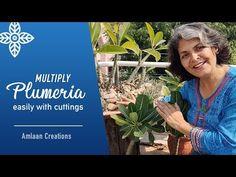 Plumeria Care, Perfect Plants, Cuttings, Garden, Youtube, Garten, Plant Cuttings, Lawn And Garden, Gardens