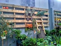 Racks made from recycled wooden pallets can be used for all sorts of things – from drying garlic to storing tools and garden pots.
