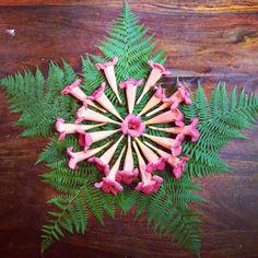 Nature mandala by Faith Evans-Sills