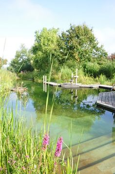 Back to Nature: How to Build an Environmentally Friendly Swimming Pool