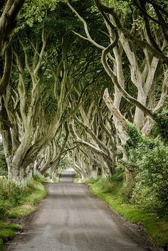The Dark Hedges - Gracehill, Northern Ireland | by laughlinc