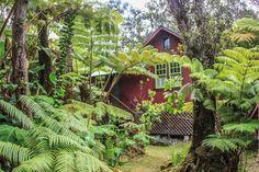 Ferny Hollow - Hawaii Volcano Vacations (has a hot tub!)