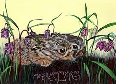 Leverets and Fritillaria with hand painted words about hope. #hope #leveret #fritillaria #spring #lettering Amazing Artwork, Cool Artwork, Sam Cannon, Colored Pencils, Pencil Drawings, Owl, Bloom, Hand Painted, Paintings