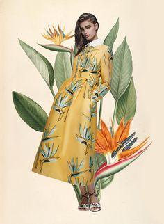 Miss Moss: Botanical Resort. Colour Mash Ups of Resort 2016 x Vintage Botanical Illustrations