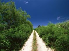 Japan: Beautiful Okinawa - A road to the Beach,  Okinawa Island