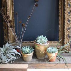Love these simple little succulents in easy DIY gilded terra cotta planters - via designsponge :)