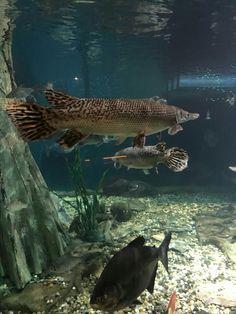 Malaysia Truly Asia, Whale, Aquarium, Fish, Pets, Animals, Garden, Goldfish Bowl, Whales