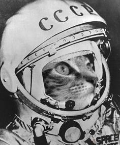 astronaut cat - Google Search