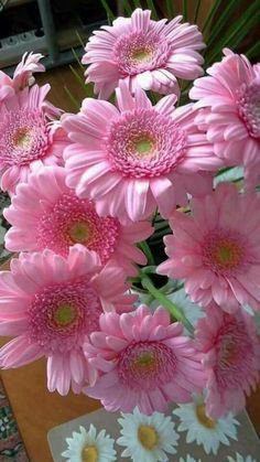 Gerberas, or Gerber Daisies. Exotic Flowers, Amazing Flowers, Colorful Flowers, Spring Flowers, Happy Flowers, My Flower, Pretty Flowers, Pink Gerbera, Pink Daisy