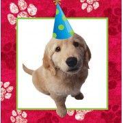 Puppy Dog Party Supplies Australia
